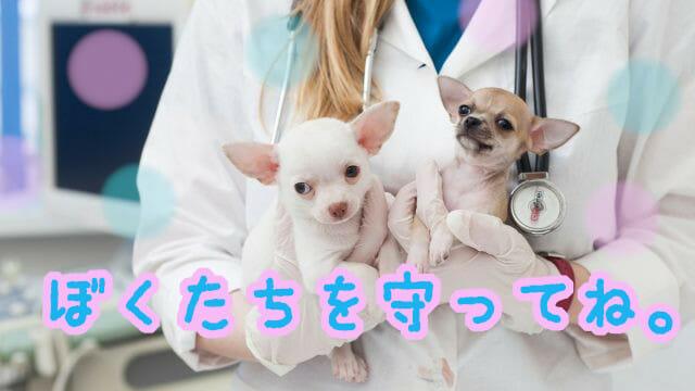 お医者さんに抱っこされた子犬