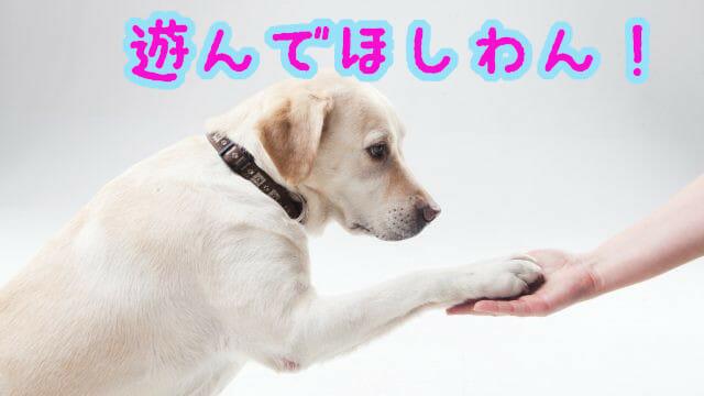 お手をする犬