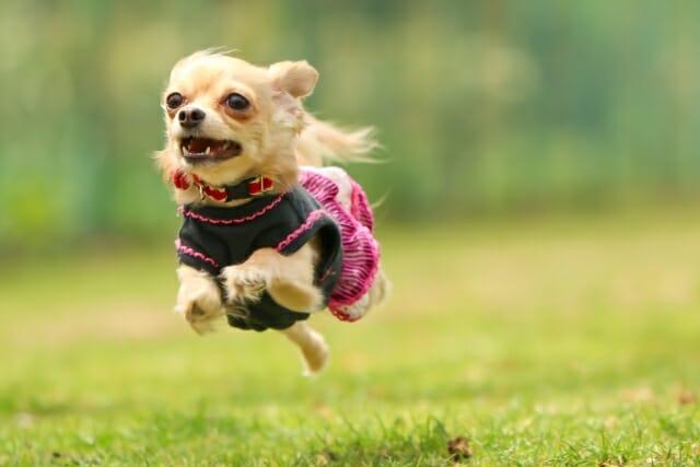 空中を飛んでいるかの様に浮いて写っている走る犬の写真
