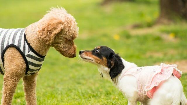 二匹の犬が鼻を合わせている