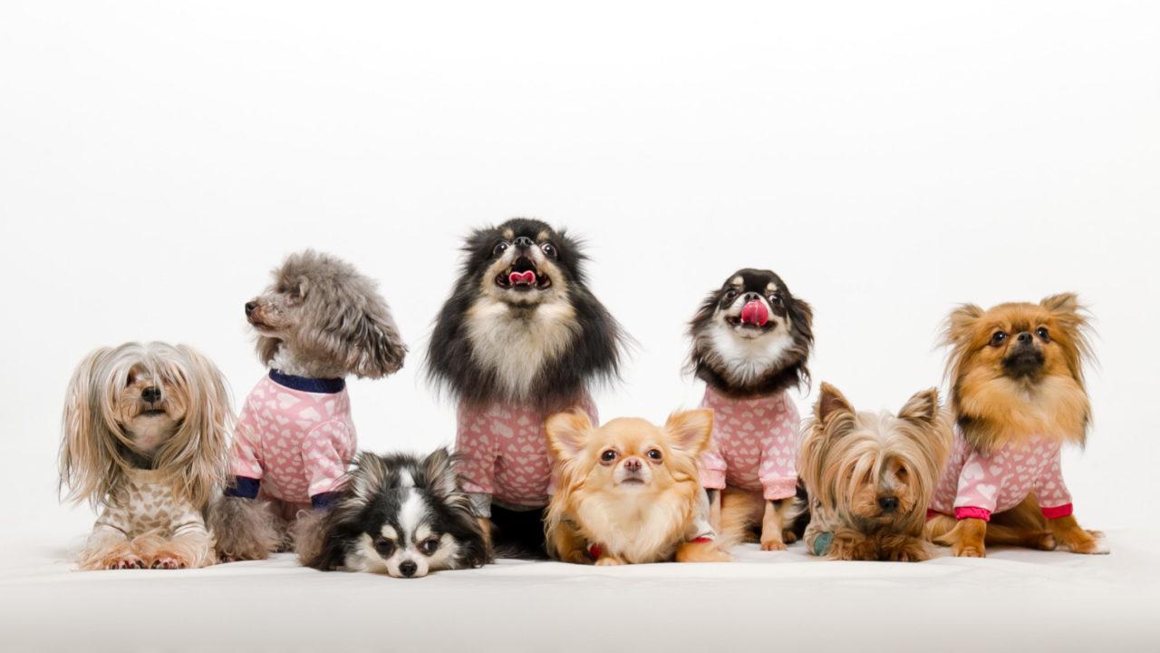 8匹のいろいろな種類の犬