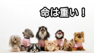 8匹のいろいろな犬