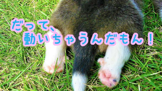 子犬の後ろ足と肉球と尻尾