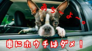車の中から暑そうに顔を出す犬