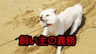 リードを引っ張って抵抗する犬