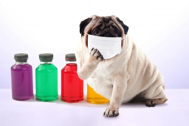 いろいろな色の液体の入った瓶の前でマスクに手を当ててこちらをみている犬