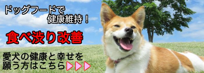 愛犬の健康維持
