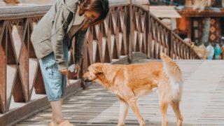 飼い主に近寄る犬