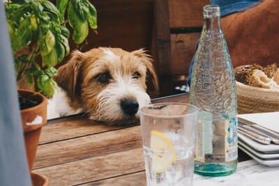 テーブルに顔を乗せている犬