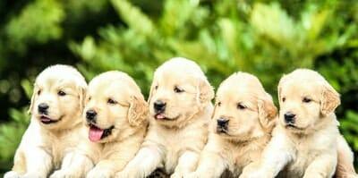 6匹の子犬