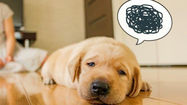体調が悪そうな犬