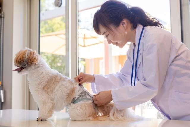 犬におむつをは変える女性