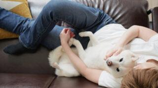 飼い主と愛犬のコミュニケーション